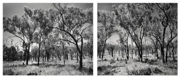 William Yang 'The country around Chillagoe #2'